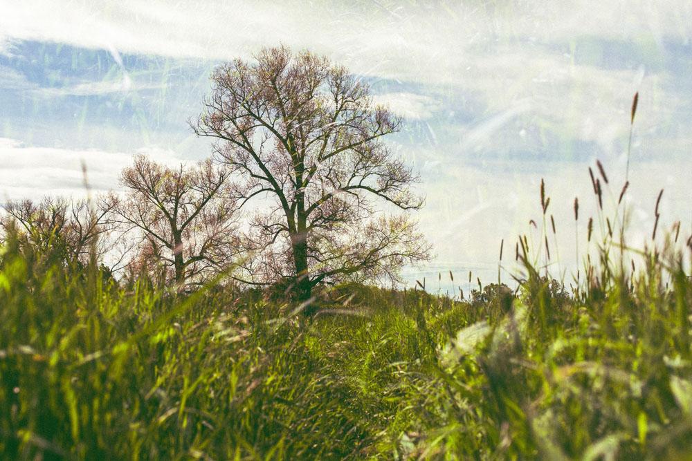 Ein Baum und anderes